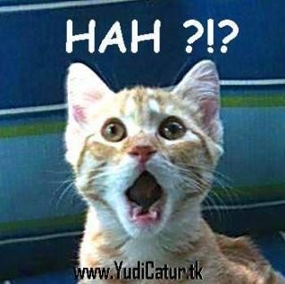 yudiweb kucing hah