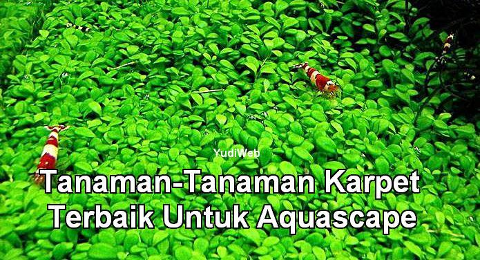 5 Tanaman Karpet Terbaik Untuk Aquascape | Download ...